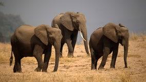 Elephant kills tourist in Zimbabwe's Mana Pools