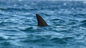 90% of sharks mysteriously wiped out nearly 20 million years ago: researchers