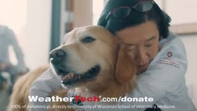 'Scout's illness devastated us:' Dog treated for cancer by UW vets featured in Super Bowl ad