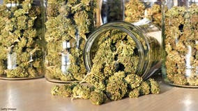 Medical pot on campus: Colleges say no and face lawsuits