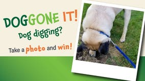 Is your dog digging again? Help We Energies spread an important safety message