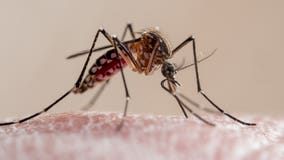 Mosquitoes 'bad' in Wisconsin, Mosquito Squad sees increase in calls