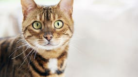 Meow Mix recalls some cat food over potential salmonella contamination
