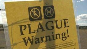 Officials: Colorado sees 1st human plague case since 2015