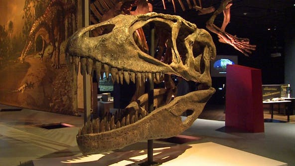 Milwaukee Public Museum reopens Thursday, 2 other museums to reopen Friday