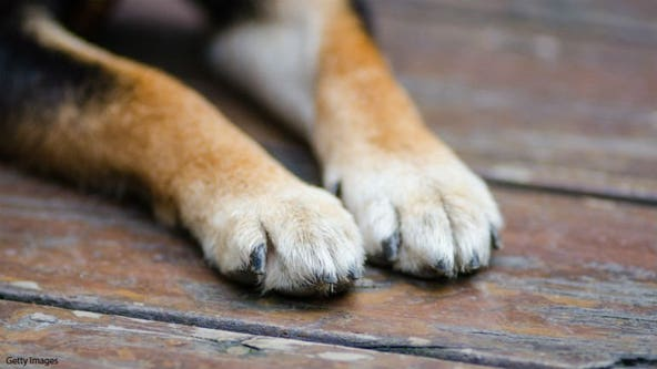 Pennsylvania city seeing suspicious wave of dog deaths: reports