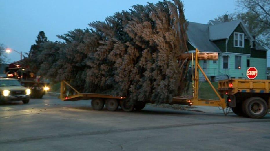 2017 City of Milwaukee Christmas Tree