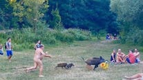 Nudist chases wild boar who snatched his laptop