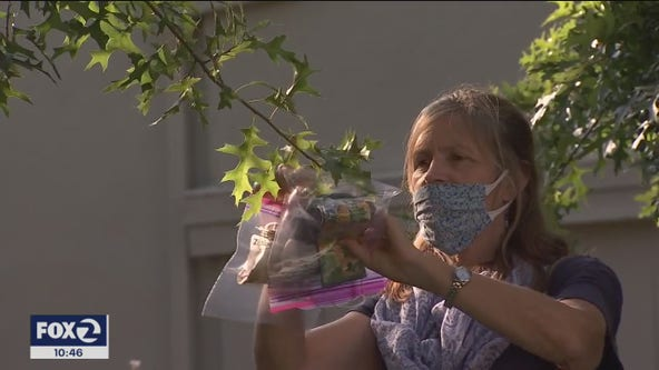 Need a mask? In one California town, they appear to be growing on trees