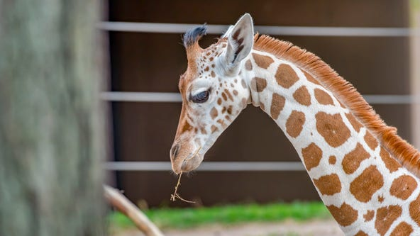 Want to visit the Milwaukee County Zoo? Advance reservations not required beginning Thursday, Aug. 13