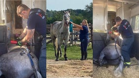 '1 for the books:' Germantown firefighters rescued 'spooked' horse trapped in trailer