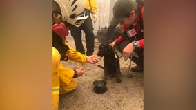 Puppy rescued from charred remains of home in California as wildfires burn through West Coast