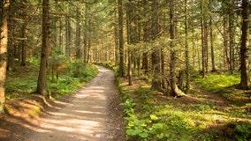 Gov. Evers order calls for planting 75 million trees before 2031