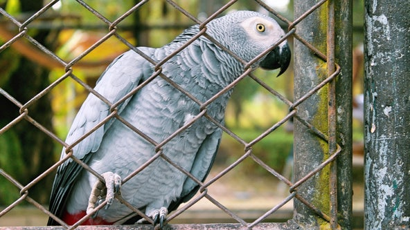 Zoo removes parrots from view after they kept swearing at visitors