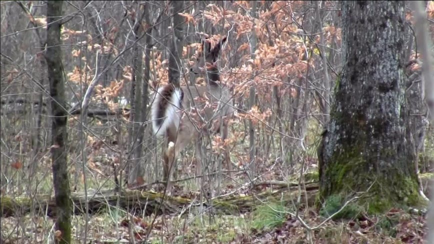 Wisconsin DNR asks deer hunters to participate in survey