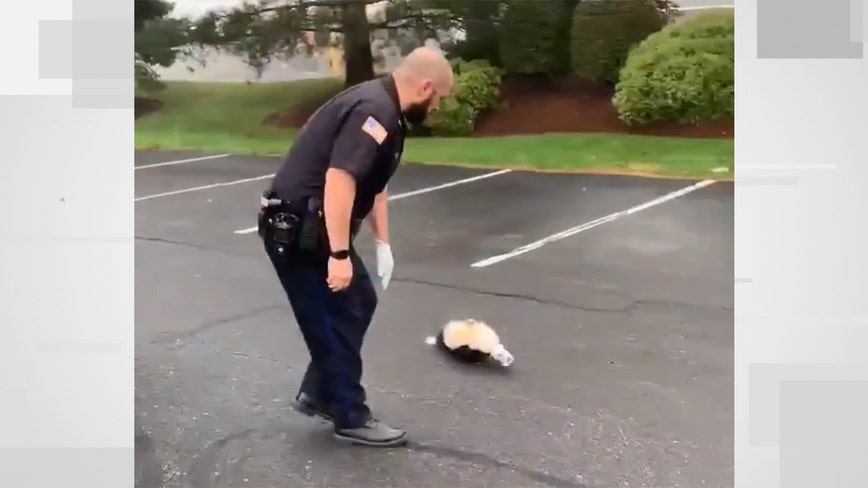 Video: Officer helps skunk in need, then gets out of the way
