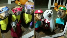 'Trick-or-treating' rescue dogs nail their group Halloween costumes