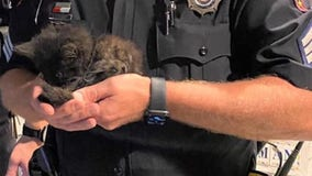 State Troopers save kitten found along I-41 near Fond du Lac