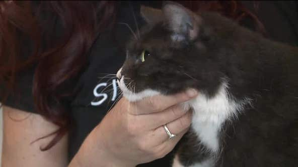 Cats that survived Beirut explosion now in Milwaukee