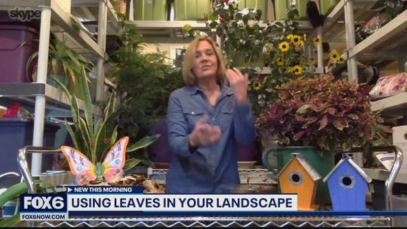 Mow them over: Benefits of using leaves in your garden