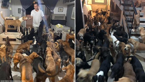 Man protects 300 dogs from Hurricane Delta by bringing them inside his home to keep them safe