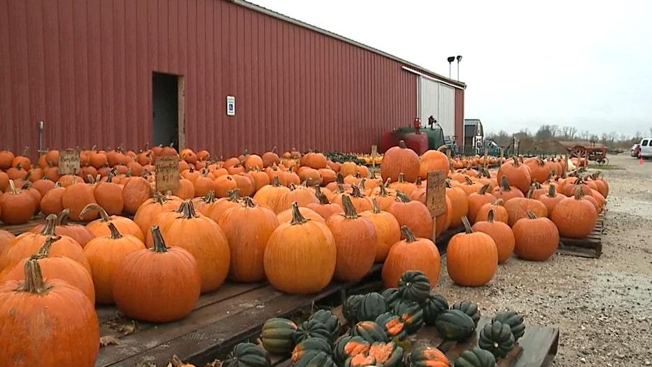 Pumpkins at Buechler Farms, Belgium