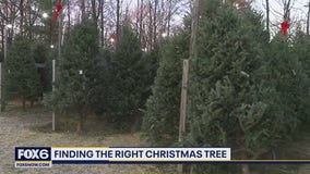 Mequon nursery has Christmas 'Trees for Less'