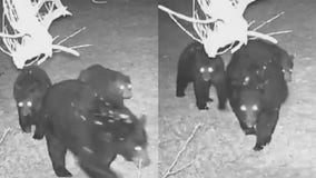 'Shocked:' Bears caught on camera in Washington County