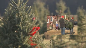 Mequon tree farm 'busier than ever' as families get outdoors