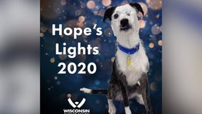Humane Society's Hope's Lights campaign helps animals in need