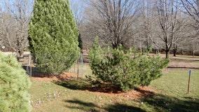 Case closed: Tip helps solve theft of rare tree at UW Arboretum