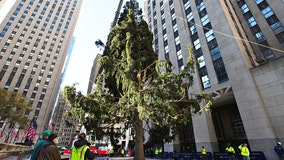 2020 Rockefeller Christmas Tree more reminiscent of 'A Charlie Brown Christmas' tree, 'stumps' social media