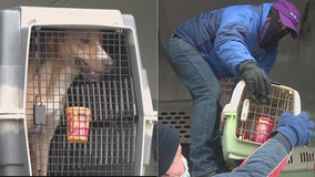 HAWS in Waukesha takes in 50 animals from Louisiana shelter
