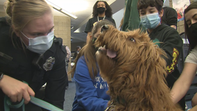 Police dogs help Greenfield officers relieve stress amid pandemic