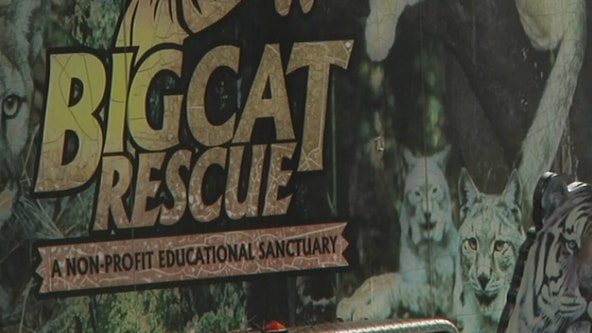 Hillsborough County Fire Rescue responding to a reported injury at Big Cat Rescue