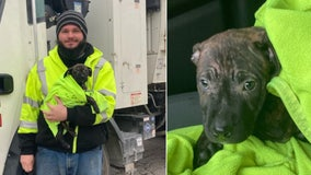 Garbage truck driver hailed as a hero for rescuing puppy he found in discarded backpack