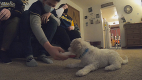 Cancer-battling teen gets emotional support pup: 'Happy face'