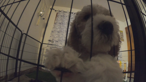 Cancer-battling teen gets emotional support pup