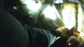 Body camera video of pursuit suspect taken into custody