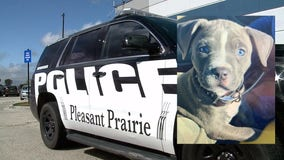 Police seek puppy stolen from lot at Pleasant Prairie Outlet Mall