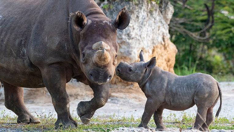 zoo miami baby rhino 3