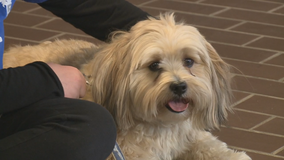 Therapy dog: COVID stress relief at Racine school