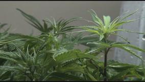 On 4-20, debate grows in Wisconsin over cannabis reform legislation