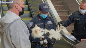 Puppy rescued after paw gets stuck in PATH station escalator