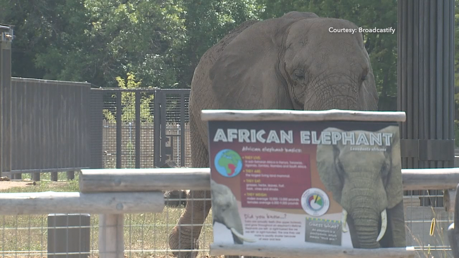 Man detained after he 'jumped into' MKE zoo's elephant enclosure