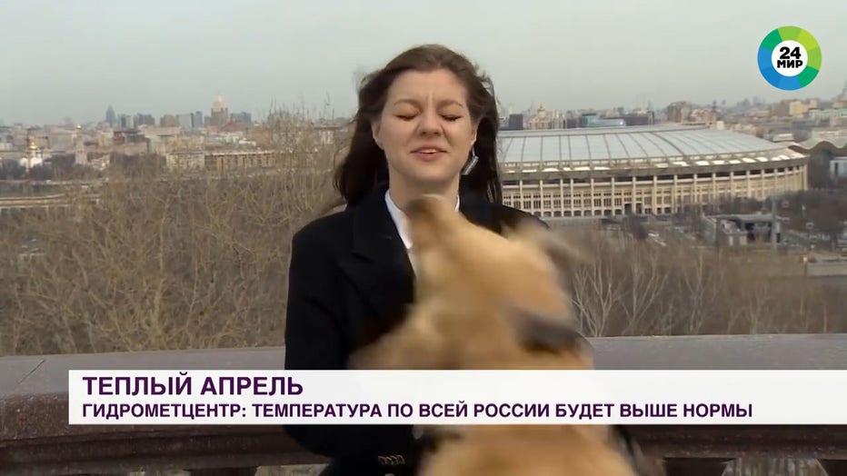 dog steals mic