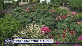 Spring planting: Get started with these simple tips