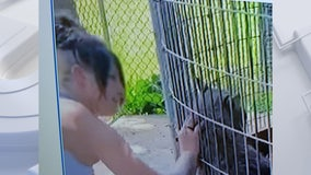 Shalom Wildlife Zoo bans woman seen petting bobcat