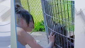 Shalom Wildlife Zoo seeks to ID person who climbed barrier fence