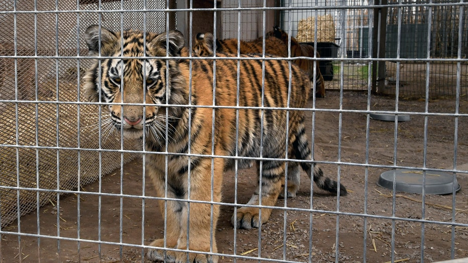 Zoo in Wynnewood, Oklahoma Features Exotic Animals